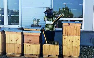 Jedna včela pre každého Ružinovčana